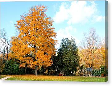 Canvas Print featuring the photograph Tree Of Gold by Joe  Ng