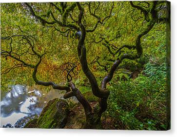 Canvas Print featuring the photograph Tree Of Life by Ken Stanback