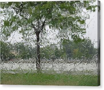 Tree Of Life Stands In A Storm Canvas Print by Judy Via-Wolff