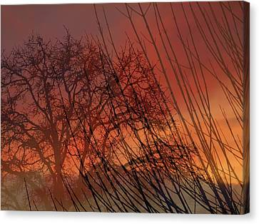 Canvas Print featuring the photograph Tree Of Life Sunset by Cindy Wright