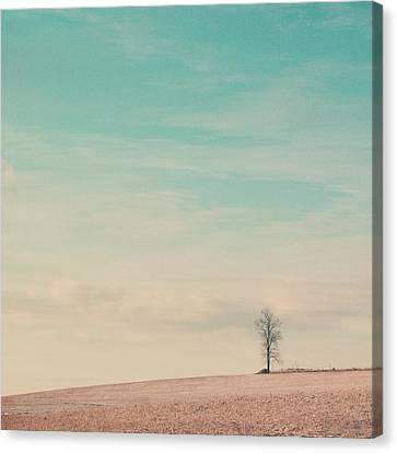 Tree On A Hill Top Canvas Print by Laura Ruth