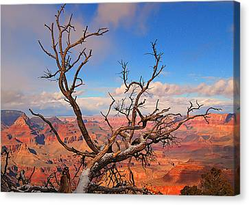 Tree Over Grand Canyon Canvas Print