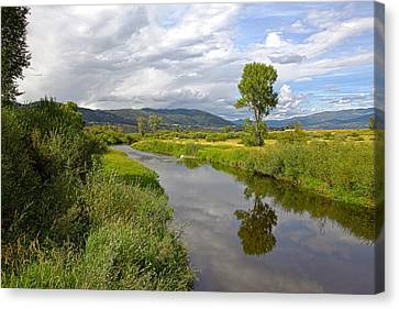 Tree Reflection Canvas Print by James Steele