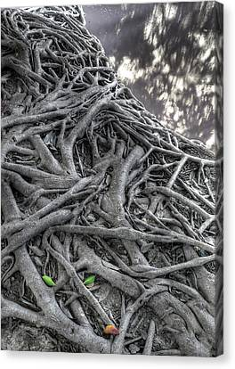 Tree Roots Canvas Print by Natthawut Punyosaeng