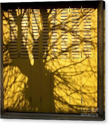 Tree Shadow Canvas Print by Bernard Jaubert