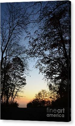 Canvas Print featuring the photograph Tree Silhouette At Sunset 1 by Bruno Santoro