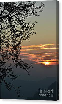 Canvas Print featuring the photograph Tree Silhouette At Sunset by Bruno Santoro