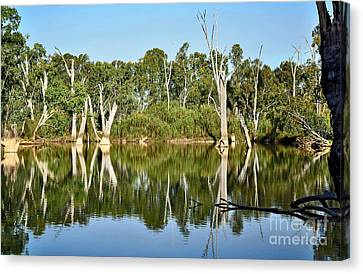 Tree Stumps In The River Canvas Print by Kaye Menner