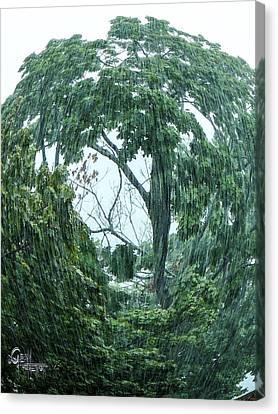 Tree Swirl Downpour Canvas Print