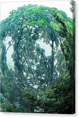 Tree Swirl Heavy Rain  Canvas Print