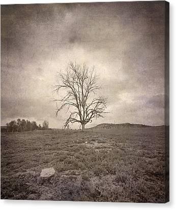 Tree Under The Rain Canvas Print by Guido Montanes Castillo