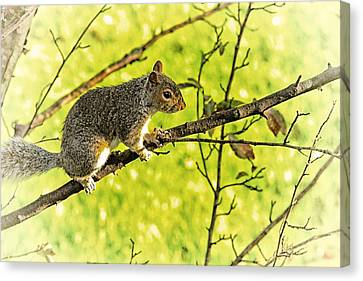 Tree Visitor Canvas Print by Karol Livote