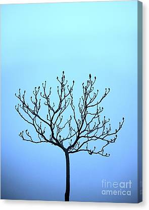 Tree With The Blues Canvas Print by Chris Dutton