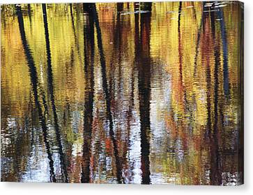 Trees And Fall Foliage Reflected Canvas Print by Medford Taylor
