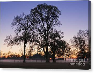 Trees And Fence In The Mist Canvas Print by Jeremy Woodhouse