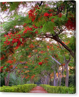 Trees And Flower In Autumn Start Canvas Print by Zoh Beny