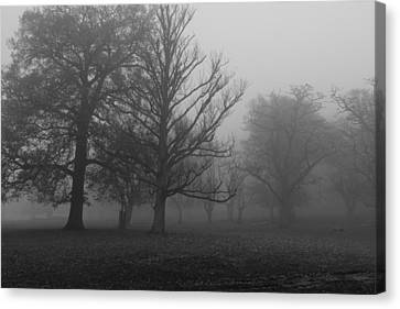 Canvas Print featuring the photograph Trees And Fog by Maj Seda