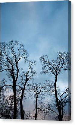 Trees. Autumn. Canvas Print