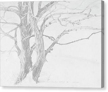 Trees In A Snow Storm Canvas Print by David Bratzel