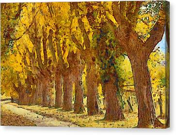 Trees In Fall - Brown And Golden Canvas Print by Matthias Hauser