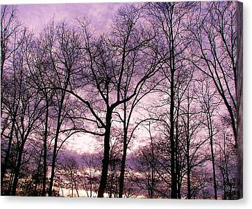 Canvas Print featuring the photograph Trees In Glorious Calm by Pamela Hyde Wilson