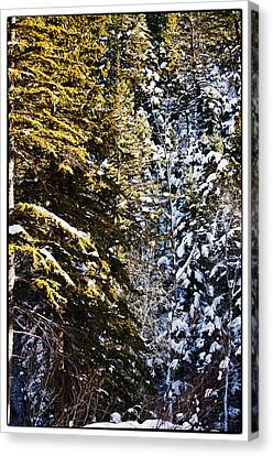 Trees In Taos Village Canvas Print