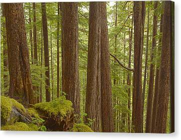 Prints Of Alaska Canvas Print - Trees In The Forest by Tim Grams