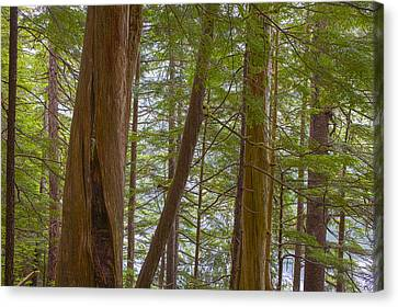 Prints Of Alaska Canvas Print - Trees In The Tongass by Tim Grams