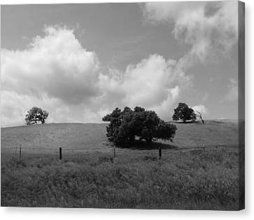 Canvas Print featuring the photograph Trees On The Hillrise by Kathleen Grace
