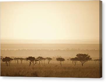 Trees On The Savannah At Sunset Masai Canvas Print by David DuChemin