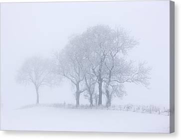 Trees Seen Through Winter Whiteout Canvas Print by John Short