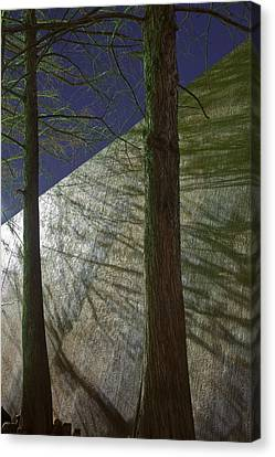 Trees Sky Shadow Canvas Print by Greg Kopriva