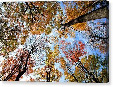 Treetops Canvas Print by Elena Elisseeva