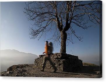 Trekking Around A Tree With A Stone Canvas Print by Alex Treadway