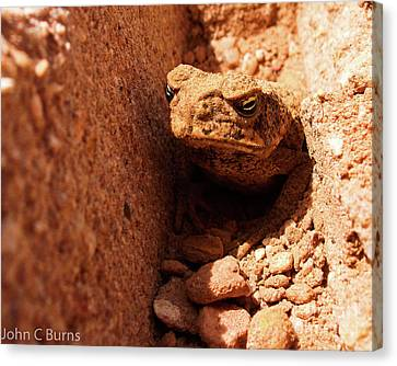 Canvas Print featuring the photograph Trenched Frog by John Burns