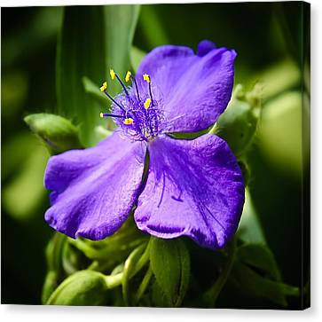 Trillium Knockout Canvas Print by Michael Putnam