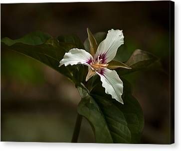 Canvas Print featuring the photograph Trillium by Nancy De Flon