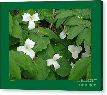 Trilliums-i Canvas Print by Patricia Overmoyer