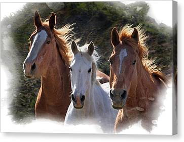 Canvas Print featuring the photograph Trio by Judy Deist