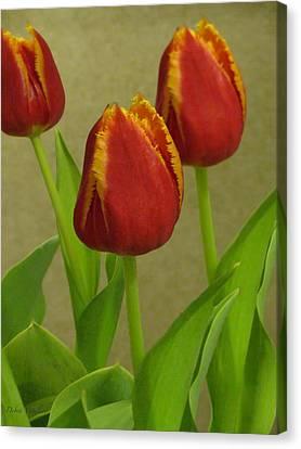 Triple Crown Floral Canvas Print by Debra     Vatalaro
