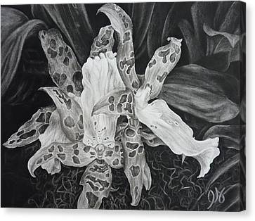 Triple Orchid Blossom Canvas Print by Estephy Sabin Figueroa
