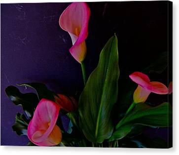 Triplets Of Calla Lilies Canvas Print by Randy Rosenberger