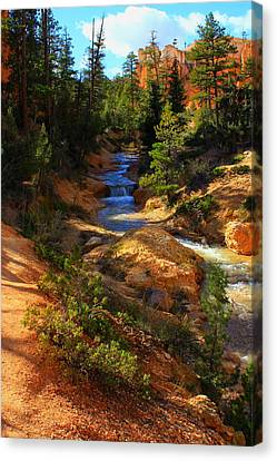 Tropic Ditch Stream Canvas Print by Sonya Anthony