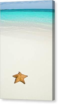 Tropical Beach And Starfish Canvas Print