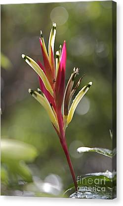 Tropical Beauty  Canvas Print