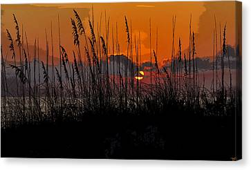 Tropical Evening Canvas Print