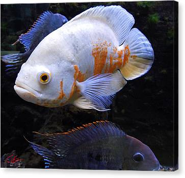 Tropical Fish  Canvas Print by Colette V Hera  Guggenheim