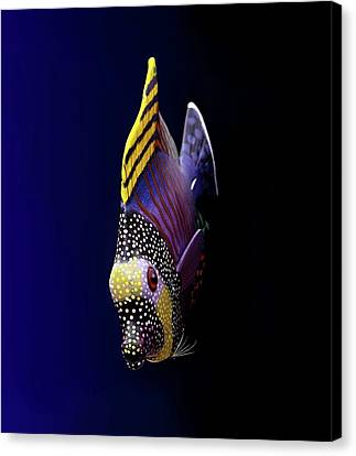 Tropical Fish Canvas Print by Pieceoflace Photography