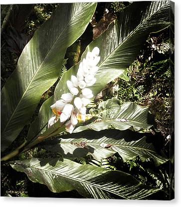 Flowers Canvas Print - Tropical Flower 2 by Gina De Gorna