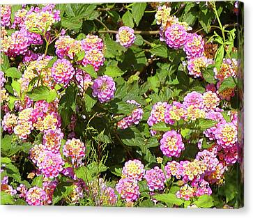 Canvas Print featuring the photograph Tropical Lantana by Roena King